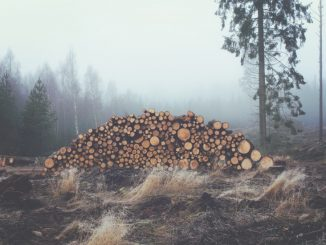 Abholzung Tagebau
