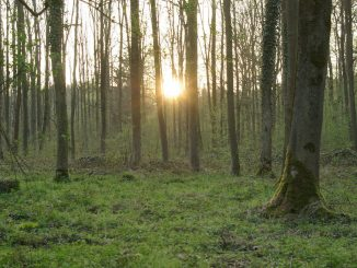 Wald Hambach